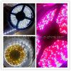 Il nastro della luce di striscia del LED LED flessibile impermeabilizza (BF-XY-3528-30-1M)