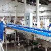 Automatisches High Precision Weighing und Grading Machine für Food Industry