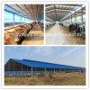 Casa modificada para requisitos particulares de la estructura de acero del bajo costo para el ganado