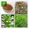 Motherwortのハーブのエキス、Leonurineの粉2%