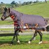 [بدّد] دافئ جمع حصان حجر السّامة دثار/أغطية لأنّ شتاء