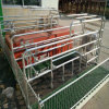 Base di figliata ad alta resistenza di Matemity della scrofa dell'azienda agricola di maiale della cassa