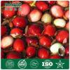 Suplemento orgânico e da alta qualidade de Mossberry do extrato ao alimento