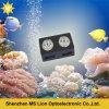 Aquarelle au coucher du soleil et au coucher du soleil pour le récif de corail