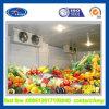家禽のフリーザーの工場冷蔵室