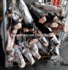 Chinese Leverancier van Aquatische Bevroren Kleine Zwarte Haai