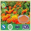 La poudre normale 5%-80% de lutéine d'extrait de fleur de souci répond à des exigences d'USP