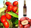 Jujube Wine EU Top, 100% Natural Vermelho Jujube Wine Chinese Paten / Sweet Type, Rich Anthocyanin, Aminoácidos, Anticancer, Radiação Resistência, Antiaging, Blood Tonic