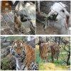 Acoplamiento del parque zoológico/acoplamiento de la cuerda de la virola del acero inoxidable