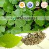 Hierba natural pura de Jin Qian Cao Longhairy Antenoron de la medicina de la hierba del 100%