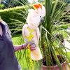 Courroie réglable de formation de harnais et de laisse d'oiseau de perroquet