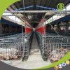 High-Efficiency het Voeden Systeem die in Moderne Varkensfokkerij gebruiken