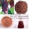 Petróleo de germen de la uva, petróleo de sésamo para cocinar esteroide
