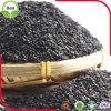 Bester Preis-organische schwarze Sesam-Startwerte für Zufallsgenerator für Öl