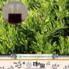 Estratto acido del foglio di 20% Carnosic Rosemary