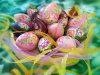 Ostern-Partei-bunte gemalte Plastikdekoration Eggs anwesendes Geschenk