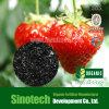 Engrais vif foliaire de Humizone : Éclaille de Humate de potassium de 90% (H090-F)