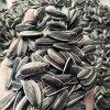 エクスポートのための最上質の中国のヒマワリの種5009