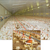 BroilerおよびChickenのための専門のDesigned Poultry Feeding Equipment