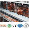 Matériel automatique de cage de poulet de couche de ferme avicole