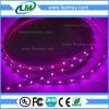 Il LED variopinto mette a nudo 2835 con l'indicatore luminoso di striscia flessibile di 60LEDs LED