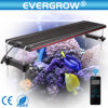 Evergrow Coral Reef Used LED Aquarium Light für Marine Reef Growth Wireless LED Aquarium Lighting
