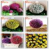 Il fornitore 2015 della fabbrica comercia la sfera all'ingrosso poco costosa del fiore artificiale