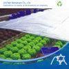 땅 Cover를 위한 PP Spunbond Nonwoven Fabric