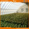 중국 식물성 설치 공급자를 위한 태양 온실