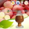 Apple 추출 /98 자연적인 % Phloretin