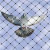 2羽のプラスチック単繊維の鳥の網の庭の反鳥の金網