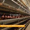 Tianrui 가금 농장 닭 계란 감금소