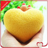 Spugna Konjac naturale di figura 100% del cuore