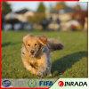 개 애완 동물 합성 연두색 뗏장 인공적인 잔디