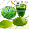 Pó convencional e orgânico do suplemento à saúde do trigo da grama