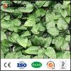 정원 제품 녹색 관목 SGS 세륨을%s 가진 플라스틱 잎 벽 훈장