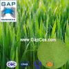 Estratto dell'erba di orzo del rifornimento dei fornitori