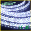 LED Flexible Strip Light di High Voltage AC220/110V SMD 3528 120LEDs