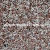 Azulejo de suelo Polished natural del granito de China, granito de Bainbrook Brown G664