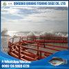 A tempestade resiste a gaiola da rede do Tilapia das gaiolas da piscicultura da cultura aquática