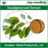 Выдержка порошка листьев евкалипта микстуры травы (10: 1)