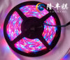 3528 LED Strip IP68 240LED/M RGB Christmas Light