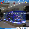 Tanque de peixes acrílico do tamanho grande para o projeto do hotel