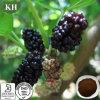 Шелковица Leaf Extract 1-Dnj (1-deoxynojirimycin) для Reducing Blood Glucose и Pressure