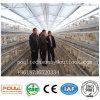 층은 자동적인 건전지 닭 감금소 시스템 가금 농기구를 감금한다