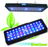 Programmeerbare 60cm 120W LED Marine Aquarium Light