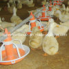Conducteurs et buveurs de volaille de qualité pour le canard