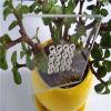 Anti folha do policarbonato do risco com proteção UV