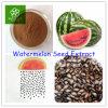 Qualitäts-Wassermelone-Startwert- für Zufallsgeneratorauszug-Puder