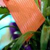 Folha da cavidade da Gêmeo-Parede do policarbonato do fornecedor de China